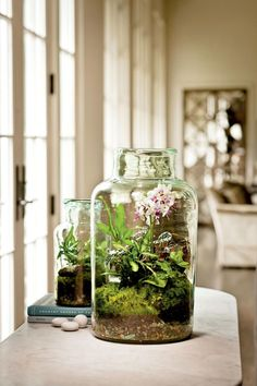 To make a terrarium, choose a glass container with an opening wide enough for your hand. Gently add an inch or two of washed, fine gravel. Top gravel with a thin layer of activated aquarium carbon. (You'll find both items at your local pet store.) Next, add moistened potting soil, and you'll be ready to plant. Create a collection of plants, or showcase just one. Good choices include ferns, succulents, mosses, miniature moth orchids, African violets, and kalanchoes.