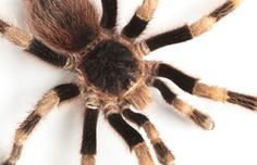Comparing Spiders and Insects | Kids Discover