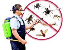 Locally owned and operated, Arizona Pest Solutions has a quarter-century of experience in the pest control business. We work with both residential and commercial clients to service the entire Phoenix-Metro area. Best Pest Control, Pest Control Services, Bug Control, Fumigation Services, Control System, Household Pests, Termite Control, Pest Solutions, Bees And Wasps