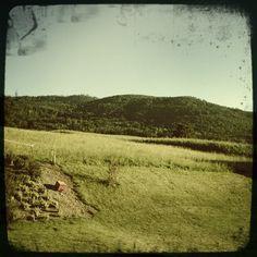 Forest View from Udligenswil - Douglas Fir Plantation   Udligenswil ...