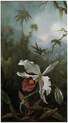 Martin Johnson Heade Painting - Two Hummingbirds Above A White Orchid by Martin Johnson Heade