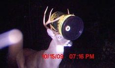 Trail cams catch all sorts of craziness. This is some of that craziness.