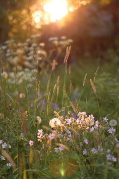Suomen kesä on. (osa Finnish summer, photo by Satu Laaninen 2015 Beautiful World, Beautiful Places, Summer Dream, Country Life, Beautiful Landscapes, Champs, Summer Vibes, Mother Nature, Wild Flowers