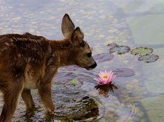 """Bambi & flower in real life. Bambi, Beautiful Creatures, Animals Beautiful, Baby Animals, Cute Animals, No Bad Days, Tier Fotos, Animal Kingdom, Pet Birds"