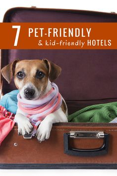 7 Great Hotel Chains For Pet Friendly Travel