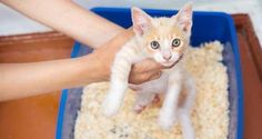 """5 Common Litter Box Mistakes 