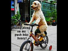 riding along on my push bike honey