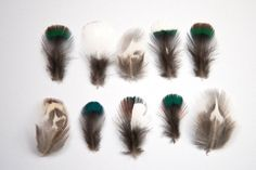 10 x Small Mixed Natural Pheasant Feathers White Green Blue Striped Black Iridescent Tiny 2 - 3 cm UK