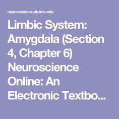 Limbic System: Amygdala (Section Chapter Neuroscience Online: An Electronic Textbook for the Neurosciences Brain Anatomy And Function, Subdural Hematoma, Empirical Research, Limbic System, University Of Texas, Brain Training, Hypnotherapy, Medical School, Positive Thoughts