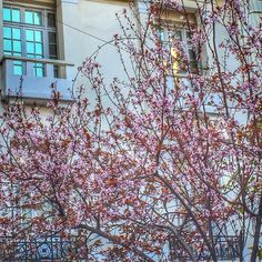 Oh, come you spring. Yesterday as I was walking the streets of Athens. Crete, Resort Spa, Athens, Walking, Spring, Instagram, Walks, Athens Greece, Hiking