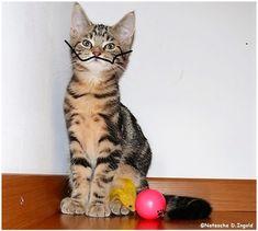 #Katze #Katzenliebhaber #Katzenbilder #Lunalinacat #catsagram #bestcat #catphoto #catsoftheworld #catoftheday #artcat #coolcat #catlove #instacat #lulucat #catlovers #catsareawesome #bestcats #instacats #catworld #crazycat Crazy Cats, Cool Cats, Cat Day, Cat Lovers, Animals, Art, Salvador Dali, Men With Style, Weird Cats