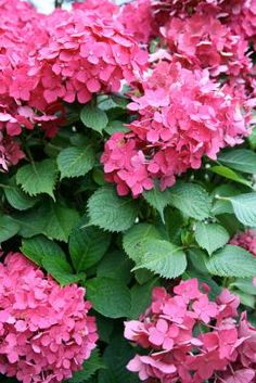 How to Plant a Garden That Blooms Year-Round