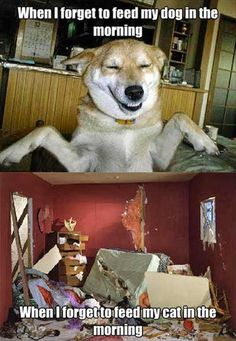 Attack Of The Funny Animals – 43 Pics