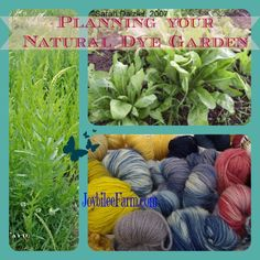 Plan your natural dye garden and grow a rainbow of natural dye colours.