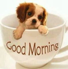 Good Morning Images Wallpaper Pictures Pics For Puppy Lover Good Morning Dog, Good Morning Funny Pictures, Cute Good Morning Quotes, Good Day Quotes, Good Morning Messages, Good Morning Animals, Lucky Quotes, Morning Pics, Night Messages