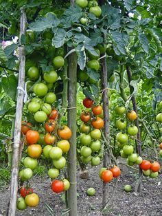 kudy-kam...: Omáčka z pečených rajčat Chutney, Homemade, Vegetables, Food, Home Made, Essen, Vegetable Recipes, Meals, Chutneys