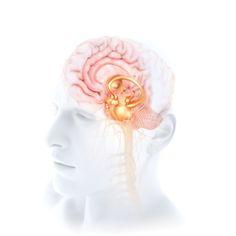 Brain on white by Bryan Christie's fine art photography