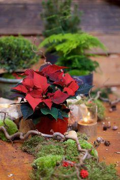 Dukning till jul