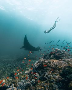 Komodo National Park, Komodo Island, Island Tour, And So The Adventure Begins, Underwater Photography, Island Life, Marine Life, Under The Sea, Beautiful World