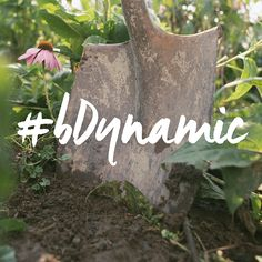 You can actually feel the energy come from the soil, through the shovel and into your hands. #bDynamic with the earth again! #biodynamicfarming #organicfarming