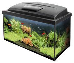 Классные аквариумы, куплю себе в офис