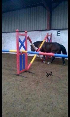 Exteme trail horse or jumping fail?!