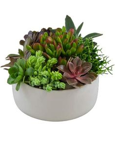 """""""I use Winston Flowers in Boston. I'm a big fan of succulents and they do a great job working them into modern, architectural-looking arrangements."""" -Frank Roop, Frank Roop Design Interiors"""
