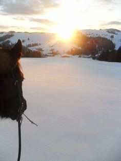 Winter Trail Riding at North Orava Cutting Horses Ranch