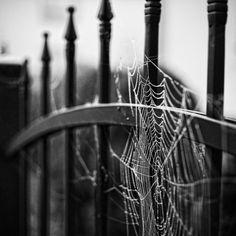 black and white, gsayour, macro, photography, spiderweb Macro Photography, Creative Photography, Spider Art, Spider Webs, Favim, Macabre, Retro, Dark Art, Fall Halloween
