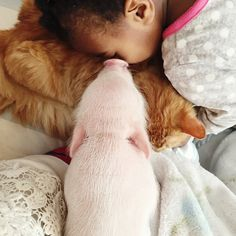 2-year-old Libby with her Teacup Piggy Wiggy Pearl and one of her Pet Cats also - Adorable Friends Sleepng Together