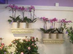 Blumengeschäft, Boutique, Innenbegrünung, Blumenshop,  florist