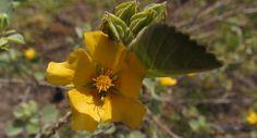 Via Kohala Watershed Partnership - Posted in Ecosystem Restoration