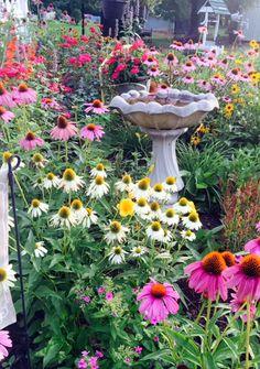Cottage Charm | Fine Gardening