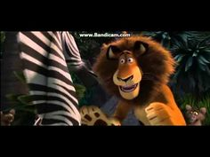 Madagascar Whos the Cat Fandub Marty Ready YouTube