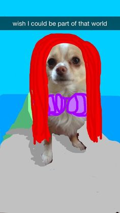 Ariel | These Snapchats Of A Dog Turned Into Disney Princesses Are Fantastic