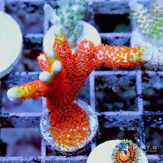 More fire being posted in our #livesale on #reef2reef!