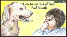 Is bad breath of your dog is troubling you? If yes, then try the natural tricks to solve the issue.Know how to get rid of dog bad breath at home