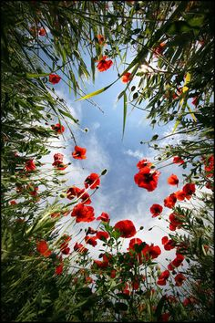 Love the prospective of this photo. I used to love laying on the grass and looking up at the sky