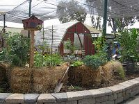 I do straw bale garden - You can do this in your back yard. Fresh tomatoes, onions, beans peas, lettuce oh the possibilites