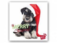 Hunderassen WeihnachtskartenMyrna Weihnachtskarte: Frohe Weihnachten -  Welpe