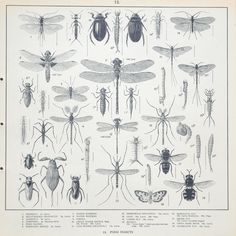 Vintage 1930's British School Poster: Pond Insects. $25.00, via Etsy.