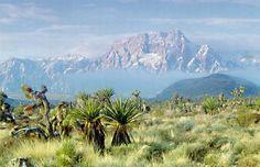 Plant Communities - LandscapeResource.