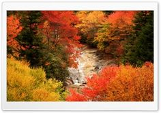Blue Ridge Parkway, North Carolina, Autumn HD Wide Wallpaper for Widescreen