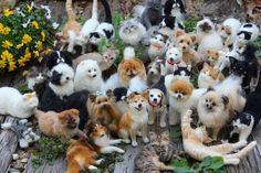 They're not real?? Felt artist displays collection of mind-blowingly life-like cats anddogs