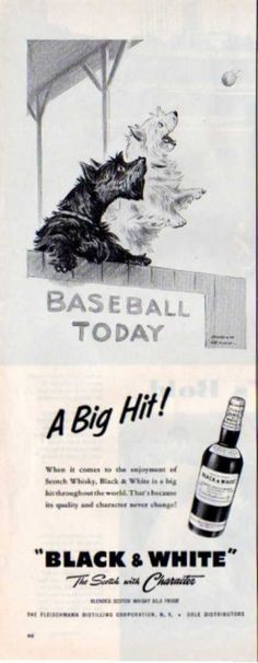 Black & White Scottish Terrier Baseball Dennis (1957)