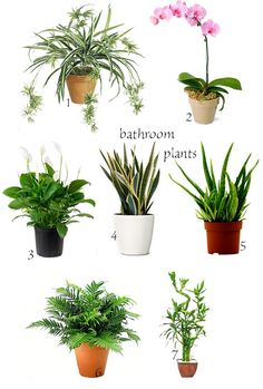 Do you have plants in your bathroom? A while ago a friend treated me to Mother-in-law's tongue saying I should put it in my bathroo...