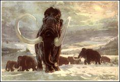 Mammoth | Zdeněk Burian (1905-1981) | Prehistoric Animals (1960)