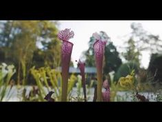 Take a morning stroll through Stoneleigh: a natural garden for a splash of green, a glow of gold, and a hint of autumn. Video by Adam Hribar. Natural Garden, Green, Nature, Naturaleza, Nature Illustration, Off Grid, Natural