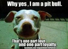I am a pit bull...and I'm loving and loyal