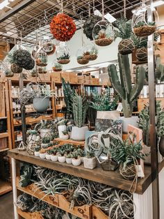 See more of abbyviktoria's content on VSCO. Cacti And Succulents, Planting Succulents, Planting Flowers, Cactus House Plants, Cactus Decor, Cactus Art, Plant Aesthetic, Plants Are Friends, Little Plants